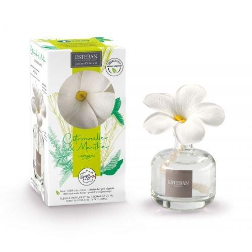 Fleur a parfum 2